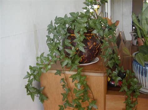 fantastic house plants   improve indoor health