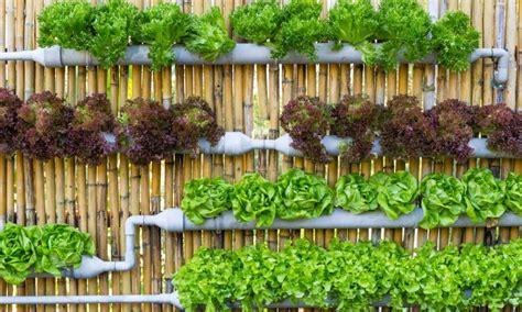 huerto urbano en casa huerto urbano come m 225 s sano cultivando tus propias hortalizas