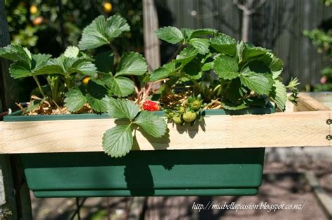 hometalk diy strawberry  herb planter