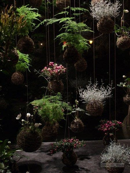 Japanese String - kokedama japanese string plants beautiful home and garden