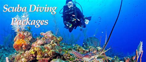 dive packages dive packages huracan diving