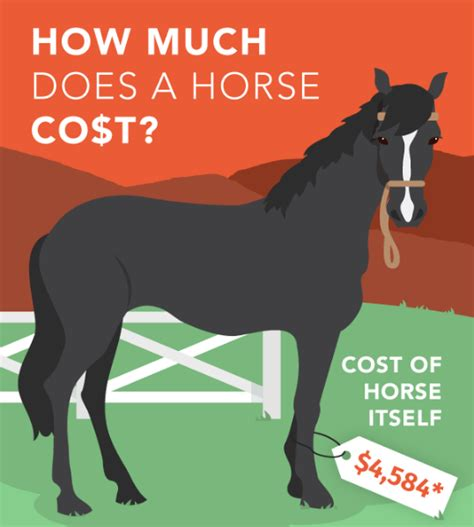 how much does a horse cost horseclicks