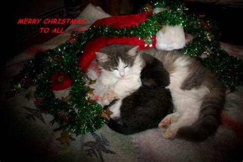 Merry Cats. Free Merry Christmas Wishes eCards, Greeting