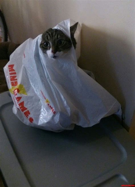 why cats are liquids the meta picture cats are liquid cute cats hq free pictures of funny