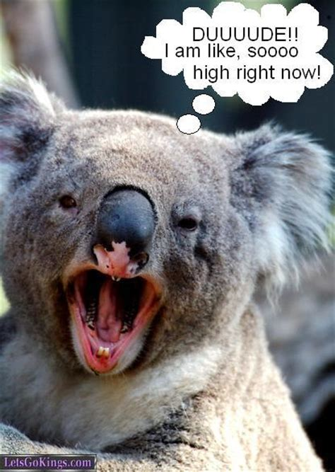Koala Meme - stoned koala meme cake ideas and designs