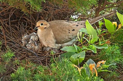 bird nesting late nesters attracting birds birds