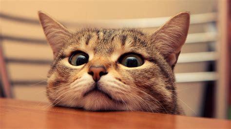 cat wallpaper for mac 1366x768 cute cat desktop pc and mac wallpaper