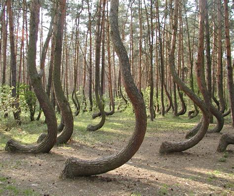 crooked forest poland 9 bizarre places that seem to be plucked from fairy tales