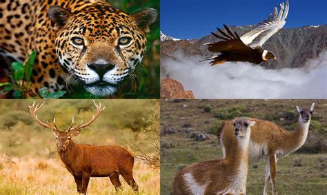 la fauna pictures santuarios para animales en argentina ii el viajero feliz