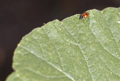 8 Ways To Deal With Pests by Ladybugs And Wasps Using The Bugs To Take Out The