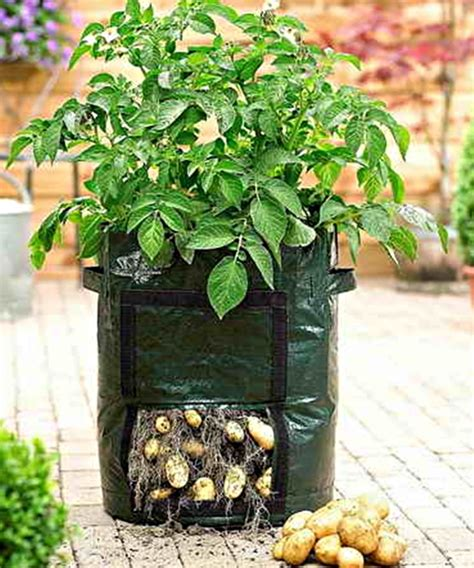 Harga Planter Bag 50 Liter potato planter bag bibitbunga