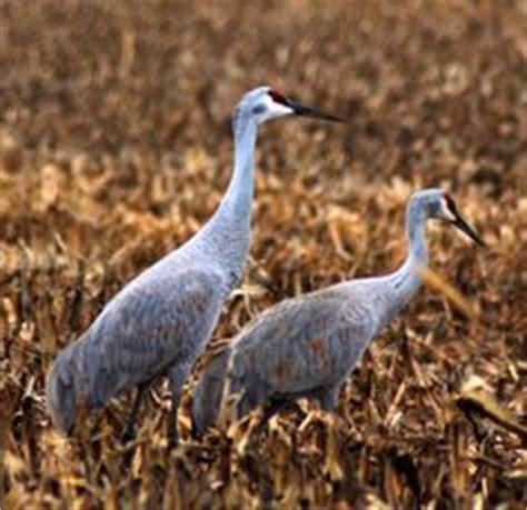 indiana backyard birds nature on pinterest backyard birds indiana and bird migration