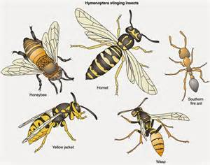 seed to feed me what is the difference between a wasp and