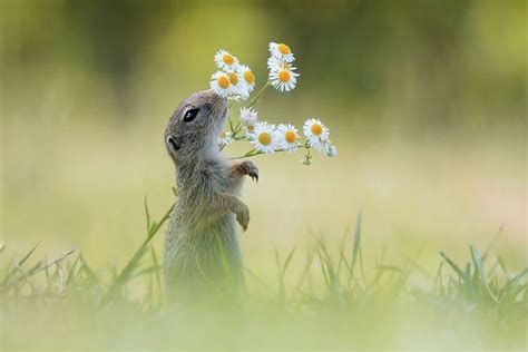 adorable animals sniffing flowers top