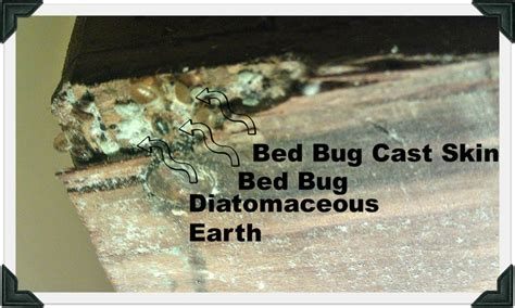 will diatomaceous earth kill bed bugs diatomaceous earth for bed bugs adorable diatomaceous