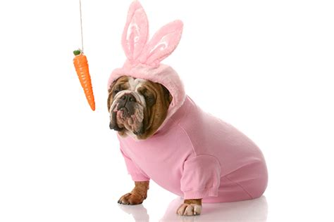 are carrots for puppies can dogs eat carrots if so are carrots for dogs the best trending news