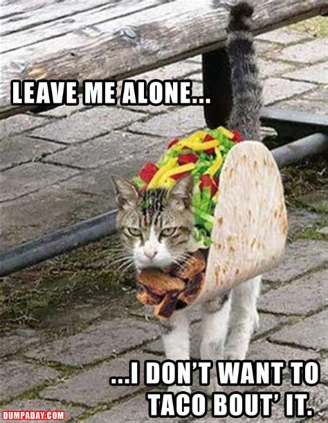 funny cat doesn't want to taco about it - Dump A Day
