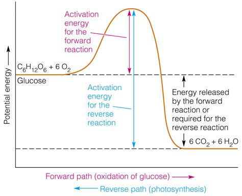 pe diagram how can i represent an exothermic reaction in a potential