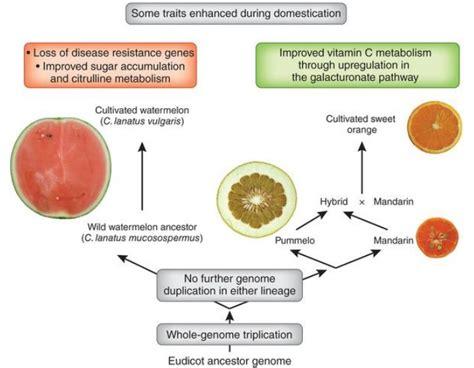 definicion de alimentos transgenicos alimentos transg 233 nicos 191 de qu 233 color son las naranjas