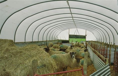 sheep housing design related keywords suggestions for sheep housing