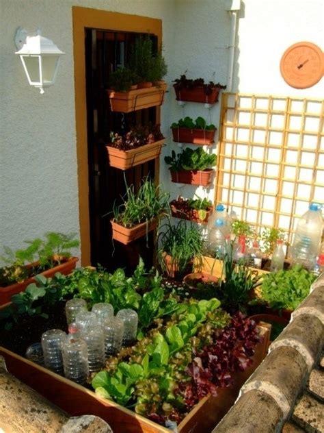 balcone o terrazzo coltivare sul balcone piante da terrazzo consigli per