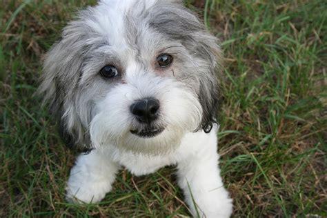 sf adoption sf spca s adoptathon bash free pet adoptions free