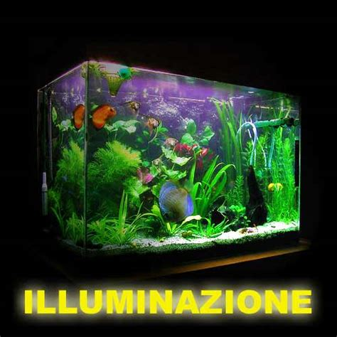 illuminazione acquario dolce illuminazione acquario dolce kelvin illuminazione