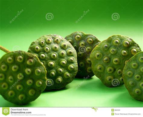 lotus fruit royalty free stock images image 892329