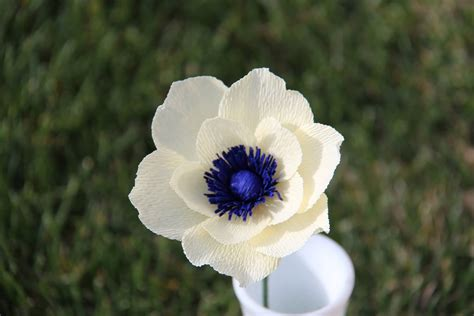 40 Adorable Anemone Flower Images Beautiful Anemone