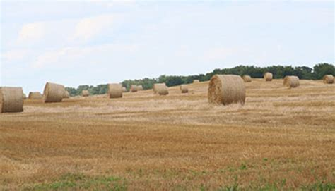 Seeding Forages Into Wheat Stubble Hay And Forage Magazine