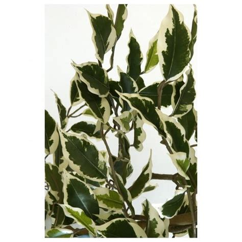 engrais plante d int rieur plantes d int 233 rieur