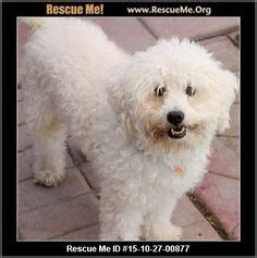 smeraglia puppy mill small hypoallergenic dogs on hypoallergenic breed breeds and