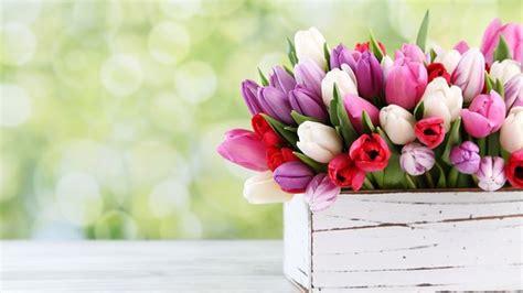foto di fiori per compleanno scarica gratis immagini di fiori per il buongiorno