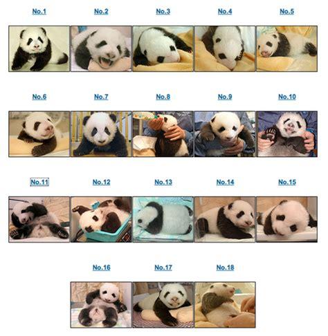 name this name this panda