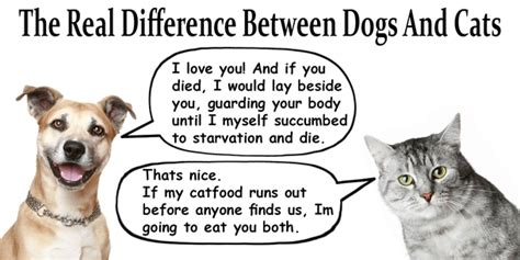 difference between cats and dogs the real difference between dogs and cats meme