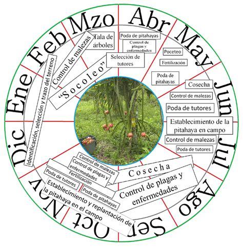 Calendario De Fertilizacion Figura 7 Calendario De Cultivo De Pitahaya En La Zona