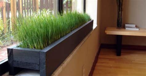 indoor windowsill planter box love the grass plant box in window sill home decorating