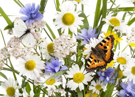 imagenes flores salvajes mariposas en flores salvajes fotos de archivo imagen