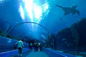 The Aquarium Original File 3 000 215 2 000 Pixels File Size 5 4 Mb