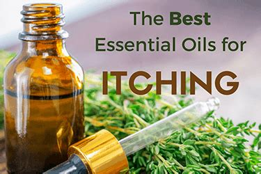 essential for itching best essential oils for itching itchy skin itch more