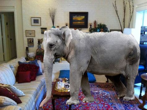 an elephant in the living room concrete testing the elephant in the living room
