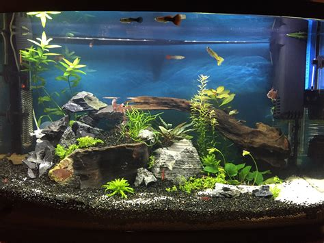 Hd Home Decor coh 233 rence dans le d 233 cor de diff 233 rents aquariums