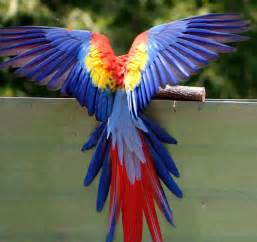 color photography bird of color photograph by randy wehner photography