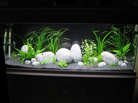 Tropical Aquarium Decorations by 208 Best Images About All About Home Aquariums On