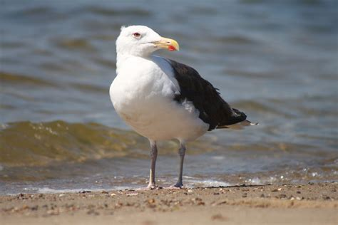 seagull cape cod cape cod vacation 2011 the stats