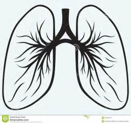 human lungs royalty free stock photos image 34581078