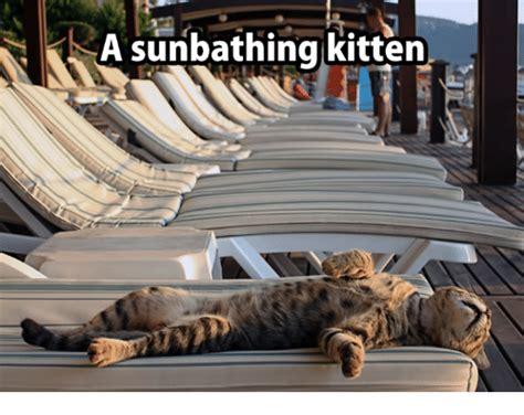 Irish Girl Sunbathing Meme - sunbathing meme 100 images brace yourselves pictures