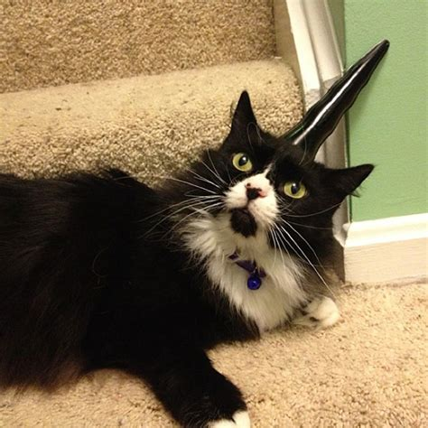 easy way to fulfill your cat s innermost evil unicorn