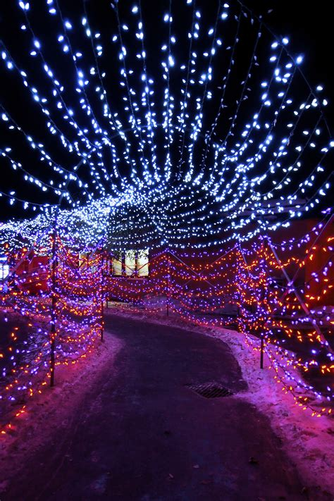 zoo lights calgary hours zoo lights calgary www topsimages