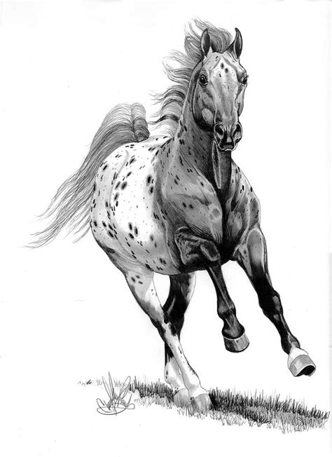coloring pages of appaloosa horses appaloosa colors images